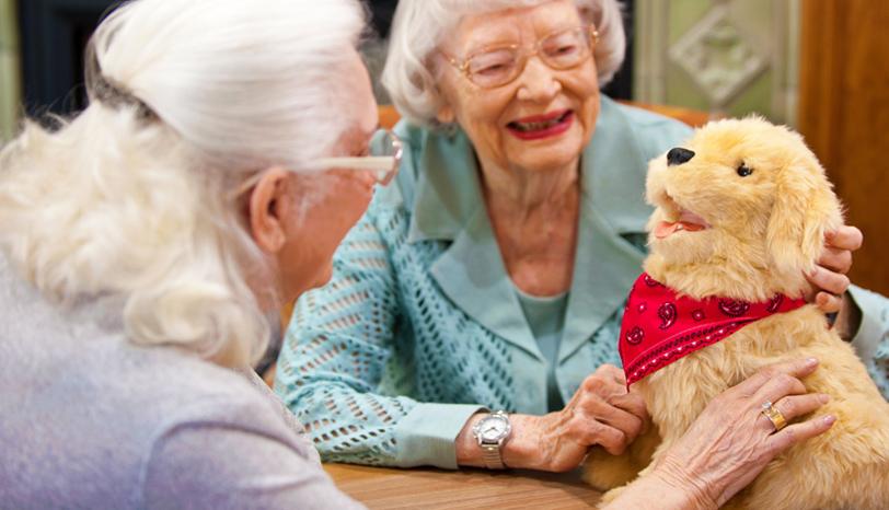Companion Therapy Pets